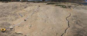 Fossil footprints challenge established theories of evolution