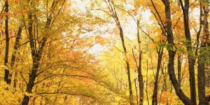 Color-blind see fall foliage for first time