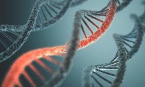 DNA is not destiny!